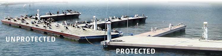 Seagull Control Seagull Deterrents Keep Seagulls Away