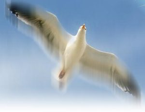 Recent Projects - Seagull Control SystemsSeagull Control Systems