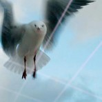 Seagull Deterrent Product
